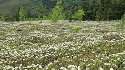 Flower field in Teshikaga, Hokkaido, Japan Footage