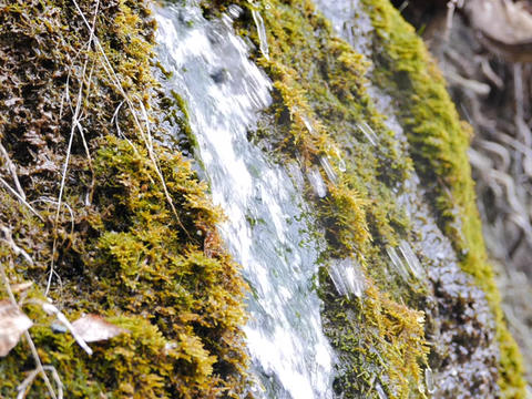 Waterfall in the moss. Russia Footage