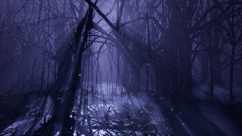 Dark mystical misty forest. A fairy-tale scary forest with tall trees in a thick fog CG動画