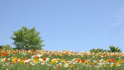 Flower field in the countryside Footage