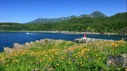 Hermocallis flowers and Utoro Harbor Lighthouse and the Shiretoko mountain range Footage