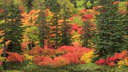 Autumn leaves at Takiminuma Pond at Kogen Onsen in the Daisetsuzan National Park Footage