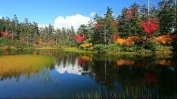 Autumn leaves at Midorinuma Pond at Kogen Onsen in the Daisetsuzan National Park Footage