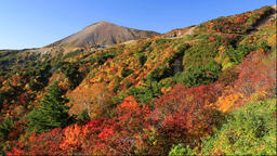 Colorful trees at Mount Azuma-Kofuji and Bandai-Azuma Roadway, Fukushima Prefect Footage