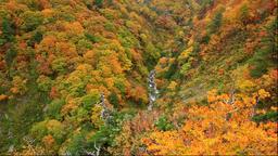 Autumn at Jyougakura Ravine, Aomori Prefecture, Japan Footage