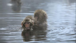 Japanese monkey taking a bath at the Jigokudani Hot Springs in Nagano Prefecture Footage