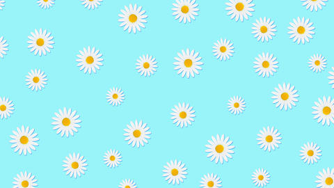 Chamomile flowers color background Animation