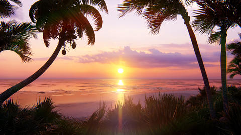 Amazing beautiful sunset over the endless ocean. Blue sky, yellow sun, palm trees, endless ocean and CG動画