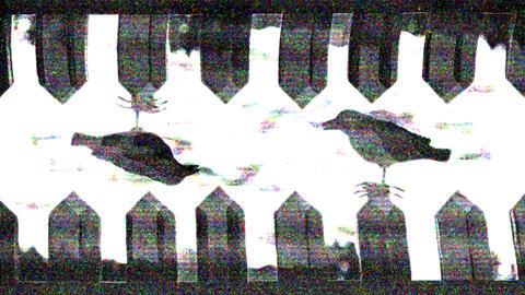 Horror Transition 10 Animation