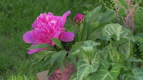Peonies Floristics Flowers GIF