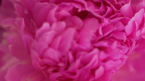 Pink Flowers Macro GIF