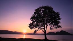 Sunrise on Lake Toya and one tree, Hokkaido, Japan Footage