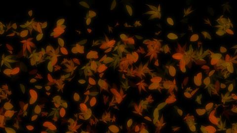 Autumn Falling Leaves Loop Animation