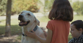 Boy and girl playing with a big white dog Footage