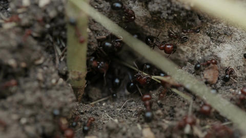 Macro shot of ants working in their nest Footage