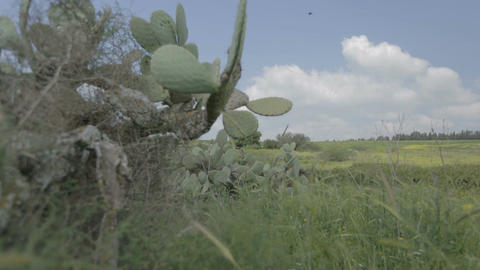 Tracking shot of cactus plants in a green landscape Footage