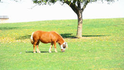 Horse on a farm near Eisingen Footage