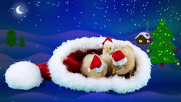 Three funny young roosters in red hats near Christmas tree Footage