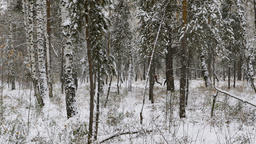 two athletes runners running in winter woods in snow Footage
