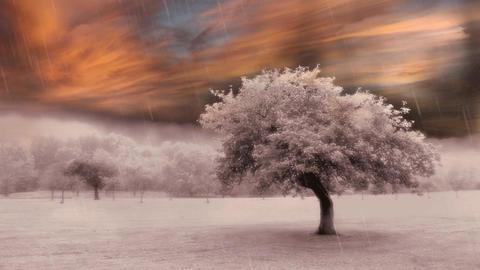 Tree in Surreal Landscape Live Action