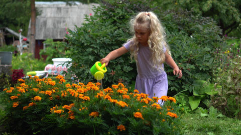 Little blond girl in dress watering flowers with small watering can in garden Live Action