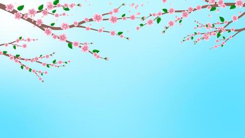 Pink Cherry blossom animation Videos animados