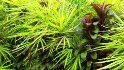 Decorative plants growing in tropical garden Footage