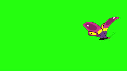 Pink butterfly flies away and returns chroma key looped CG動画