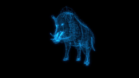 wire frame animation of Wild boar attack on black background Animation