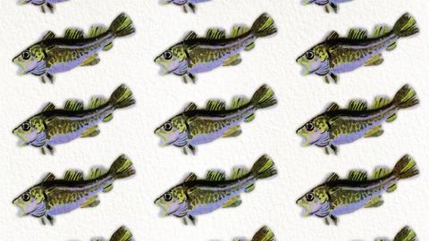 cod fish pattern Animation