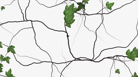 Animation - Ivy growing over a white background Animation