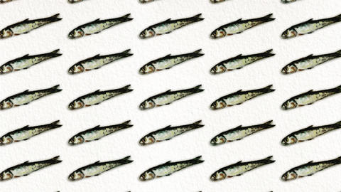 anchovy pattern Animation