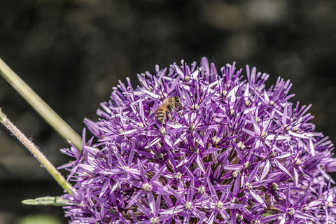 Close Up Of A Bee On A Flower フォト