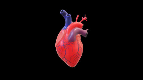 Working human heart motion graphics with dark background Animation