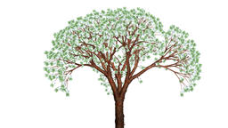 Euro tree growing and flowing in the wind, Alpha included Animation