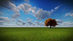 Isolated tree on green meadow, time lapse clouds Animation
