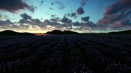 Lavender field against beautiful timelapse sunrise Stock Video Footage