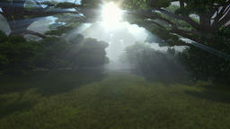 Magic forest, sun shinning through trees, camera fly Animation