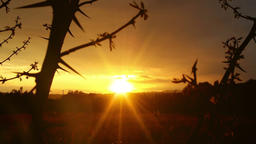 Magical sunset through thorn branches over countryside, zoom out Footage