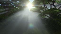Magic forest, sun shinning through trees, tilt up Animation
