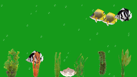 Fishes and underwater plants motion graphics with green screen background Animation
