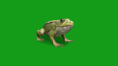 Frog motion graphics with green screen background Animation