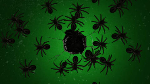 Spooky spiders motion graphics with green screen background Animation