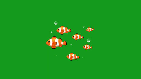 Swimming fishes motion graphics with green screen background CG動画