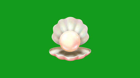 Sea shell motion graphics with green screen background Animation