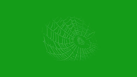 Spider web motion graphics with green screen background Animation