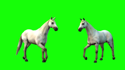 827 4K ANIMALS 3d computer generated white horses idle move and run Two view camera Animation