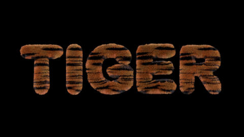 3d animated text spelling Tiger, made of fury Tiger striped letters CG動画