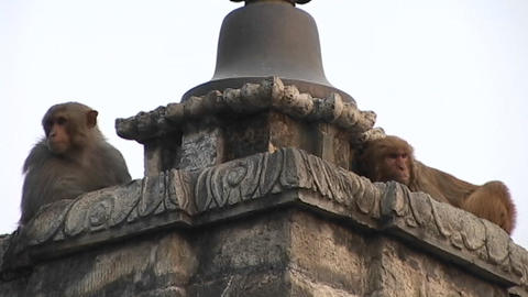 Monkeys on a religious statue at Monkey Temple in Kathmandu Stock Video Footage
