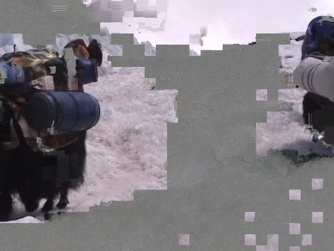 Yaks packed with expedition gear walking down an icy path... Stock Video Footage